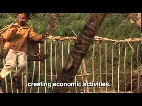 UNDP Yemen work in biodiversity