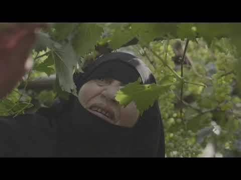 Hailah: 50 years of Love for Grape Farming
